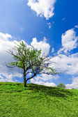 Lonely tree under cloudy blue sky — Stock Photo