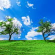 Stock Photo: Couple of trees under cloudy sky