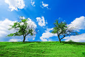 A couple of trees under cloudy sky — Stock Photo