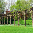 Stock Photo: Row of aligned branchless trees in park