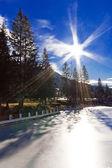 High pine trees on lake under sky — Stock Photo