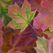 Stock Photo: Background with autumn leaves