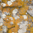 Rock covered with a lichen — Stock Photo