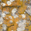 Rock covered with a lichen - Stock Photo