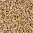 Royalty-Free Stock Photo: Wheat grains.