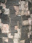 Bark of a tree — Stock Photo