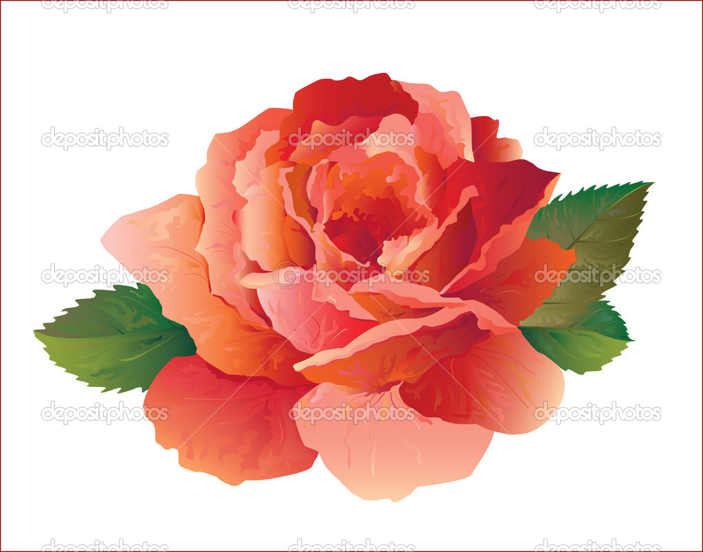 Realistic red rose.Vector — Stock Vector #1370677