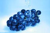 Blue grape — Стоковое фото