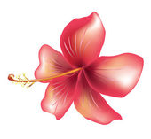 Flower hibiscus — Stock Vector