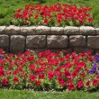 Beautiful bright flower beds in  park - Photo