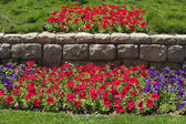 Beautiful bright flower beds in park — Stock Photo