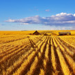 The midday on fields of Montana - Photo