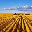 The midday on fields of Montana — Stock Photo