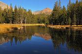 Charming shallow lake. — Stock Photo