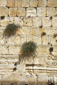 The western wall of the Jerusalem — Stock Photo