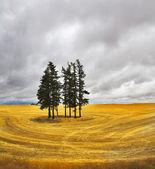 Huge field — Stock Photo