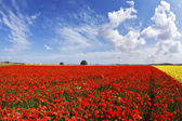 The flower field — Stock Photo
