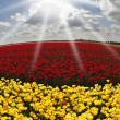 Stock Photo: Solar spring day in flowers buttercups