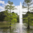 Charming lake in the Madrid park — Stock Photo