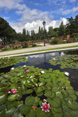 Magnificent garden of roses and lilies — Photo