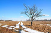 Oak near roads — Stock Photo