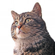 Cat on white background — Stock Photo