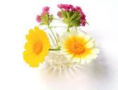 Flowerses in vase — Stock Photo