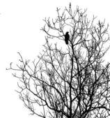 Silhouette corvi sul albero — Foto Stock