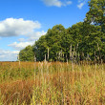 Wood near field — Stock Photo