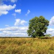 Royalty-Free Stock Photo: Oak on field
