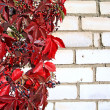 Red autumn sheet on brick wall — Stock Photo