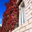 Red autumn sheet on brick wall — Stock Photo #1264866