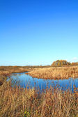 Small river on yellow field — Stock Photo
