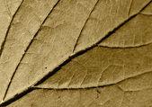 Brown sheet tree — Stock Photo