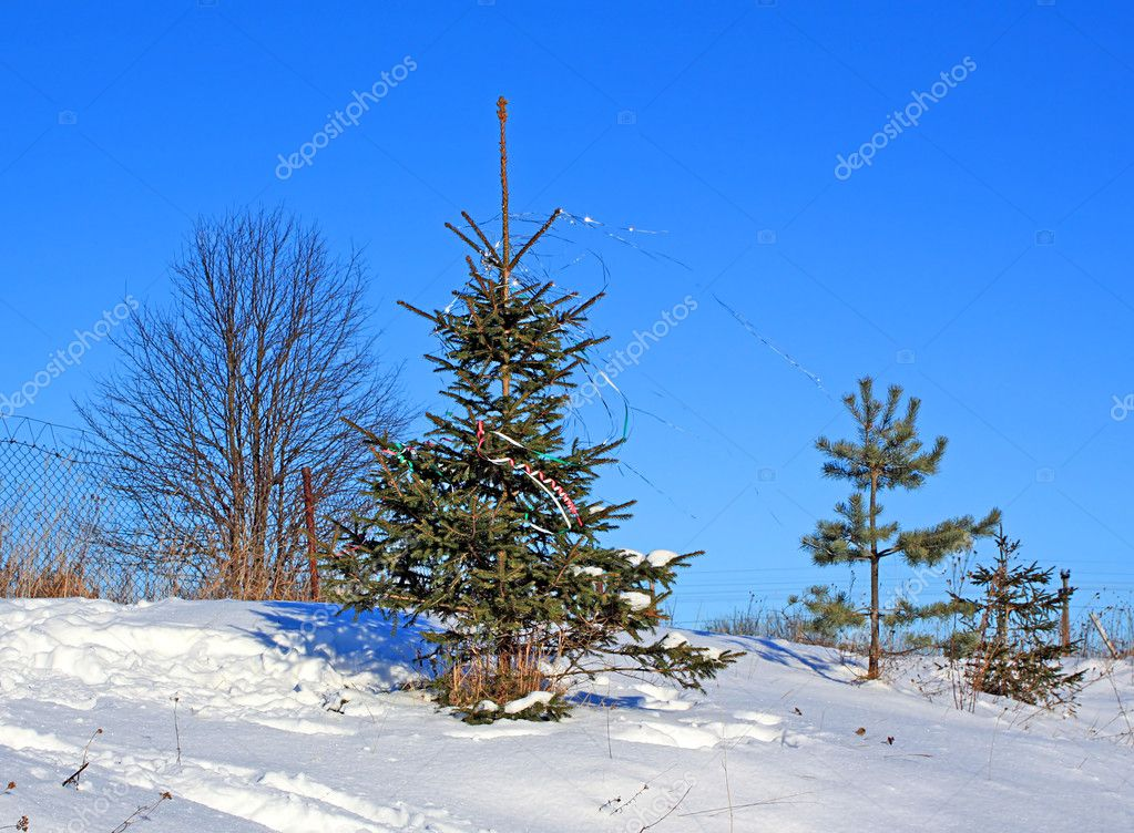 Fir tree — Stockfoto #1262180