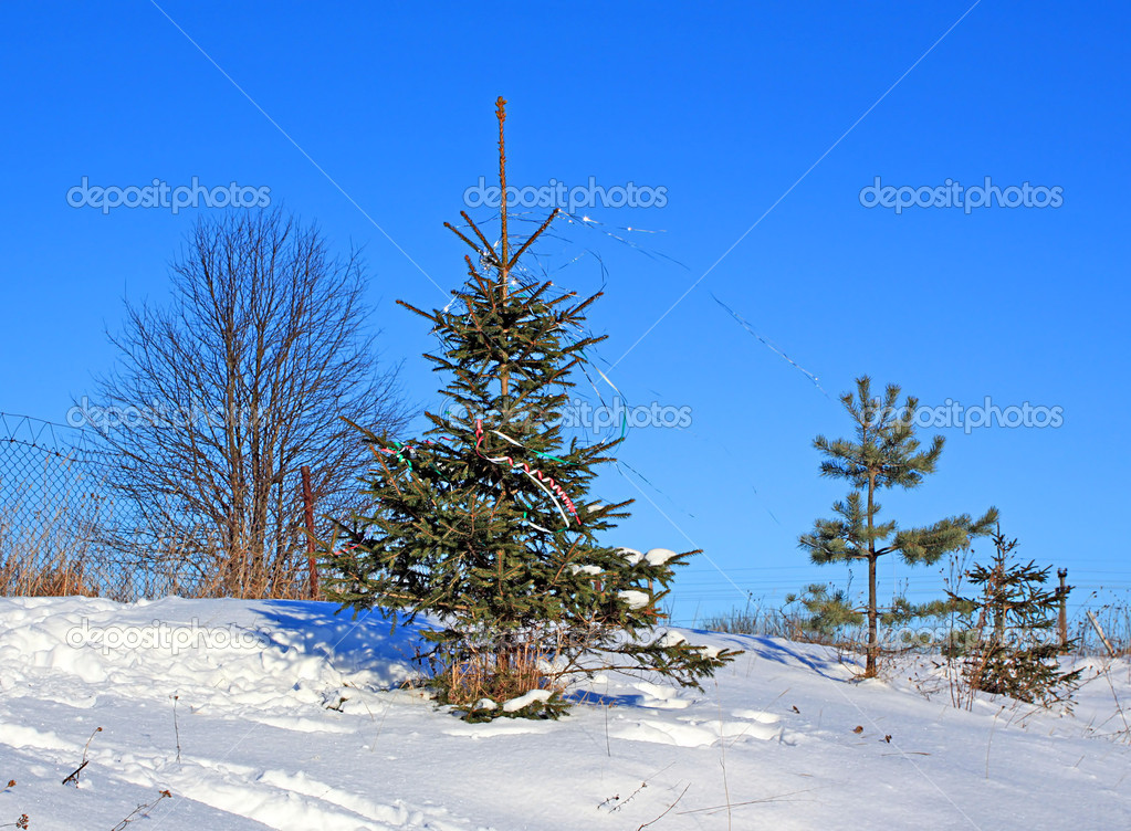 Fir tree  Foto Stock #1262180