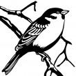 Vector silhouette sparrow — Stock Photo