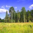 Wood near by field — Stock Photo