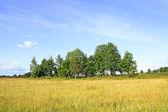 Copse on autumn field — Stock Photo