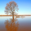 Flood in wood - Stock Photo
