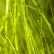 Green grass — Stock Photo #1246277