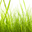 Green grass — Stock Photo #1246320