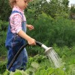 Girl pours a vegetable garden. — Stok fotoğraf