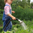 Girl pours a vegetable garden. - Stock Photo
