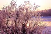 Winter landscape. Sunset. — Stock Photo