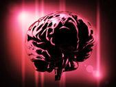 Brain — Stock Photo