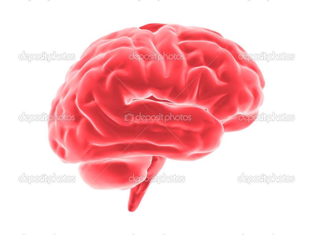Human brain  Stock Photo #1230507