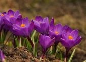 Violette bloemen — Stockfoto