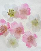 Flowers in ice — Stock Photo