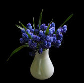 Beautiful blue flowers in the white vas — Stock Photo